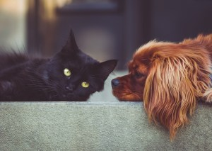 A cat and a dog looking at the camera.