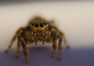JuJu the Spider