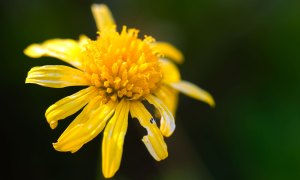 FlowerPower Background