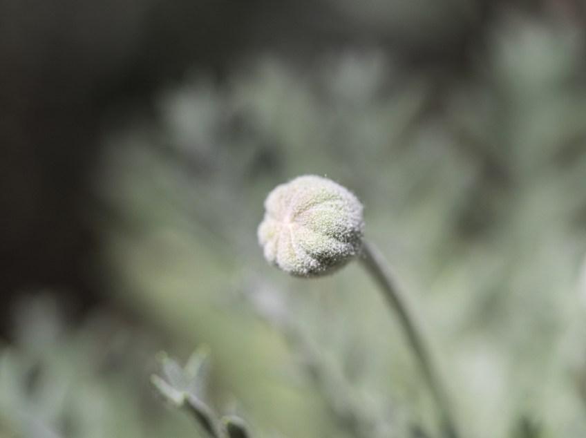Fibonacci Flower Button
