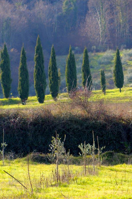 CountrysidePiniNC