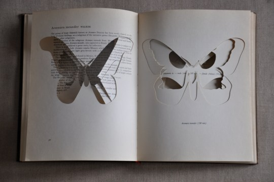 6-Beautiful Moths