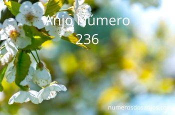 Anjo Número 236 – Significado do anjo número 236