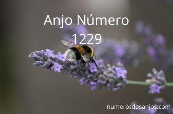 Anjo Número 1229 – Significado do anjo número 1229