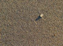 Sand and a bubble small