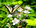 Butterfly and flower small