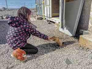 2409Ron Ullikataq Qamanirq Ron Ullikataq Qamanirq Naujaat Reanna Qamanirq Siusangnark in Naujaat feeding cookie to a siksik near high school.
