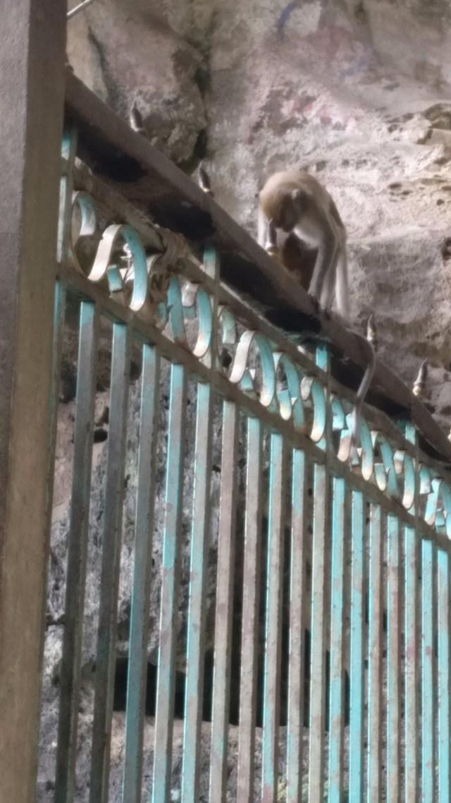 Mono subido en la reja de la cueva