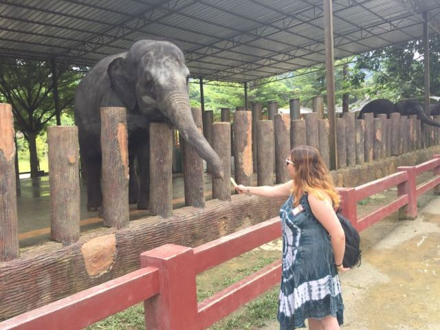 Laura dando de comer bambú a un elefante