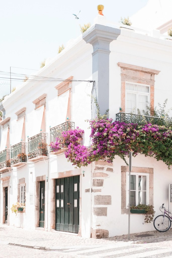 Purple flowers growing against a white building.