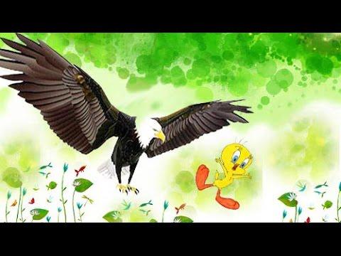 Truyện cho bé 4 tuổi số 1: Chú chim vô duyên