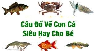 câu đố về con cá