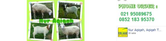 paket kambing aqiqah daerah tangerang selatan