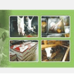 paket aqiqah di daerah bojongsari