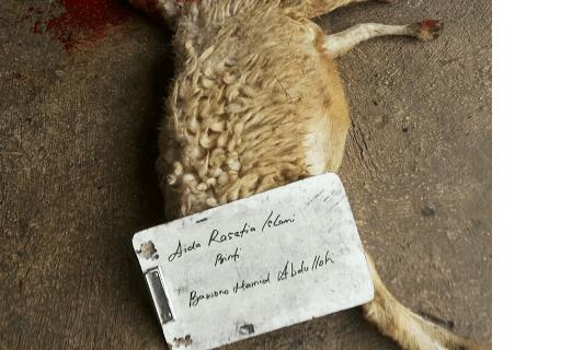 aqiqah depok 2016