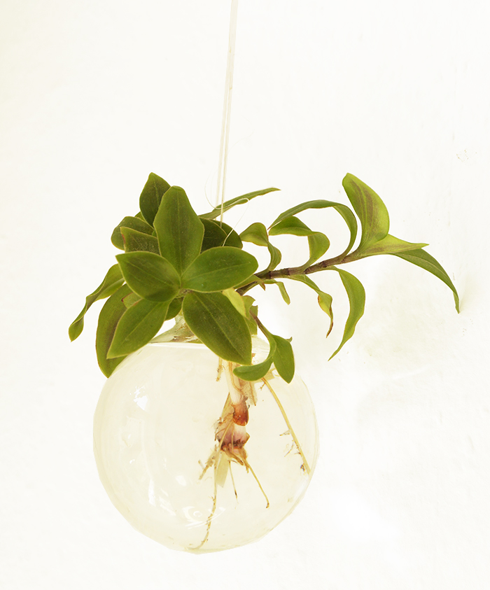 pflanze1