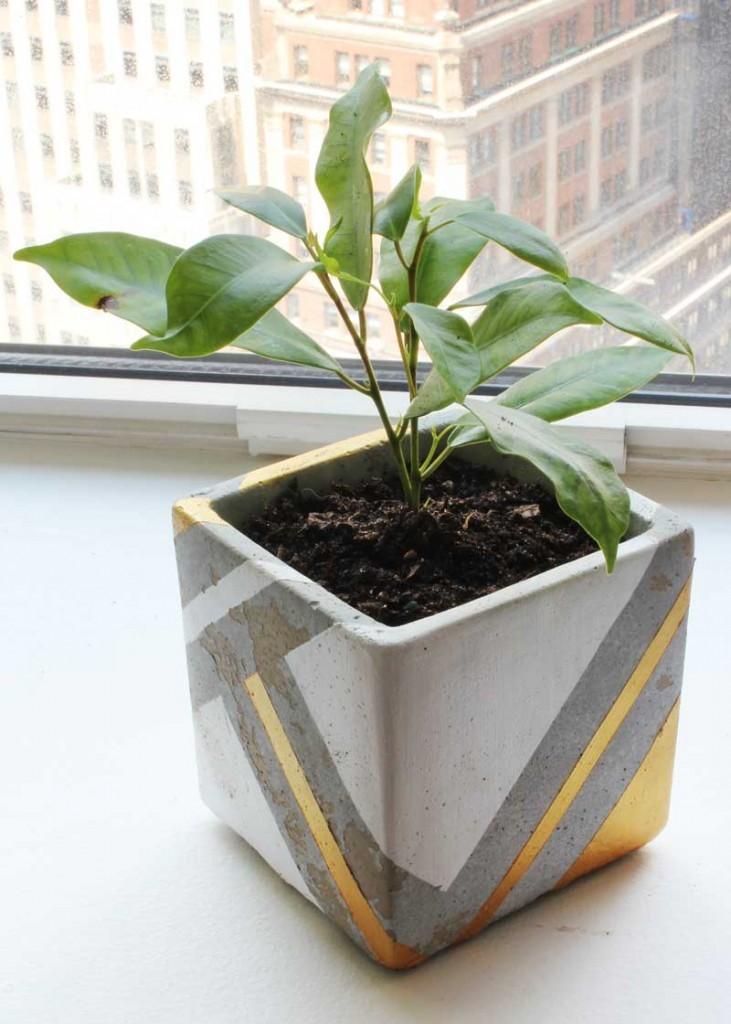 planter_isometric-731x1024