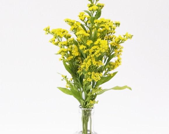 Untersetzer aus Filz für Vasen1