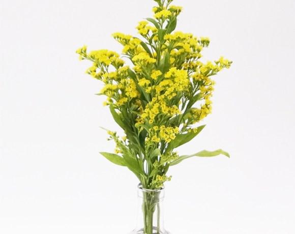 felt coaster for vase