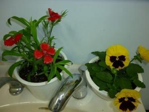 高大連携校の生徒さんからお花を買いました