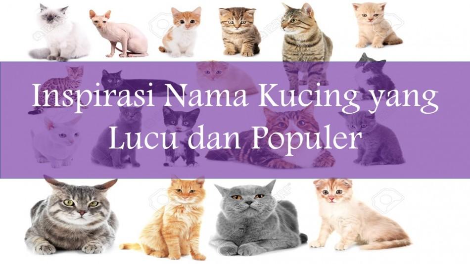 1500 Inspirasi Nama Kucing Untuk Kucing Barumu Dari A Z