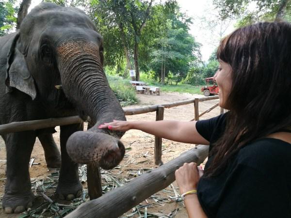 elephant haven santuario elefantes Kanchanaburi