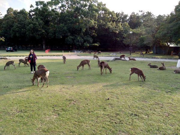 Un día en Nara