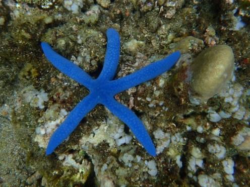 Nuestra huella en el mar