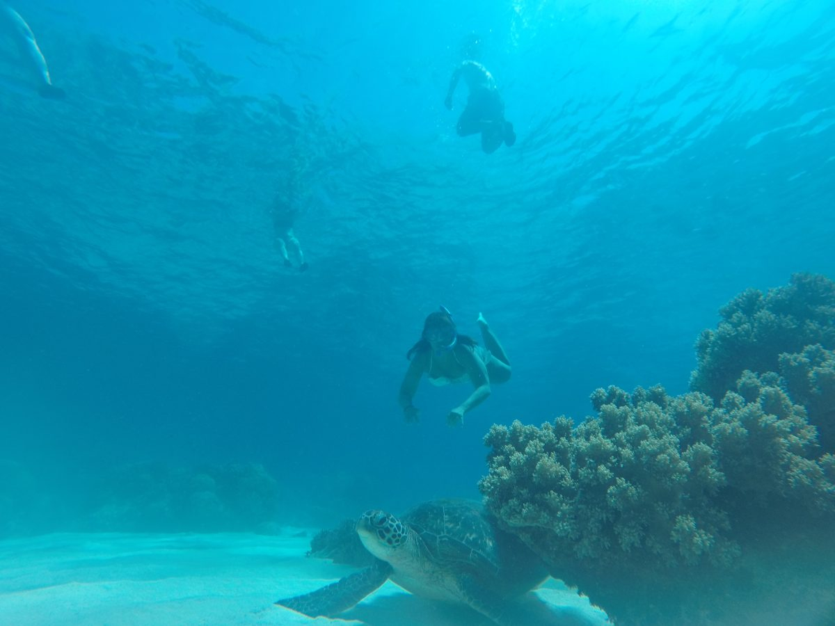 Excursión a Apo Island