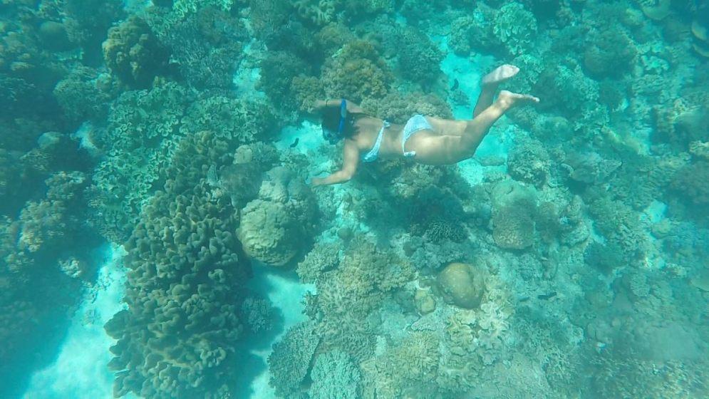 snorkel-tortuga