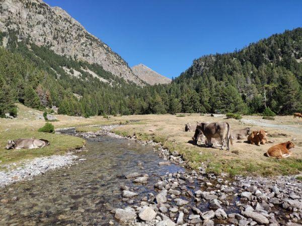 mejores excursiones por el Parque Nacional de Aigüestortes i l'Estany de Sant Maurici