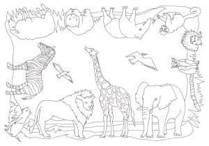 360度全方向から塗れる動物の塗り絵