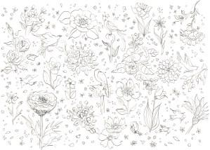 花と鳥の塗り絵