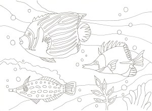 3匹の熱帯魚の塗り絵