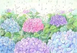 紫陽花の塗り絵の見本