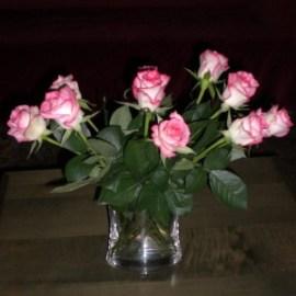 ורדים. קו ונקי