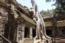 Ta Prohm - Tomb Rider Tempel