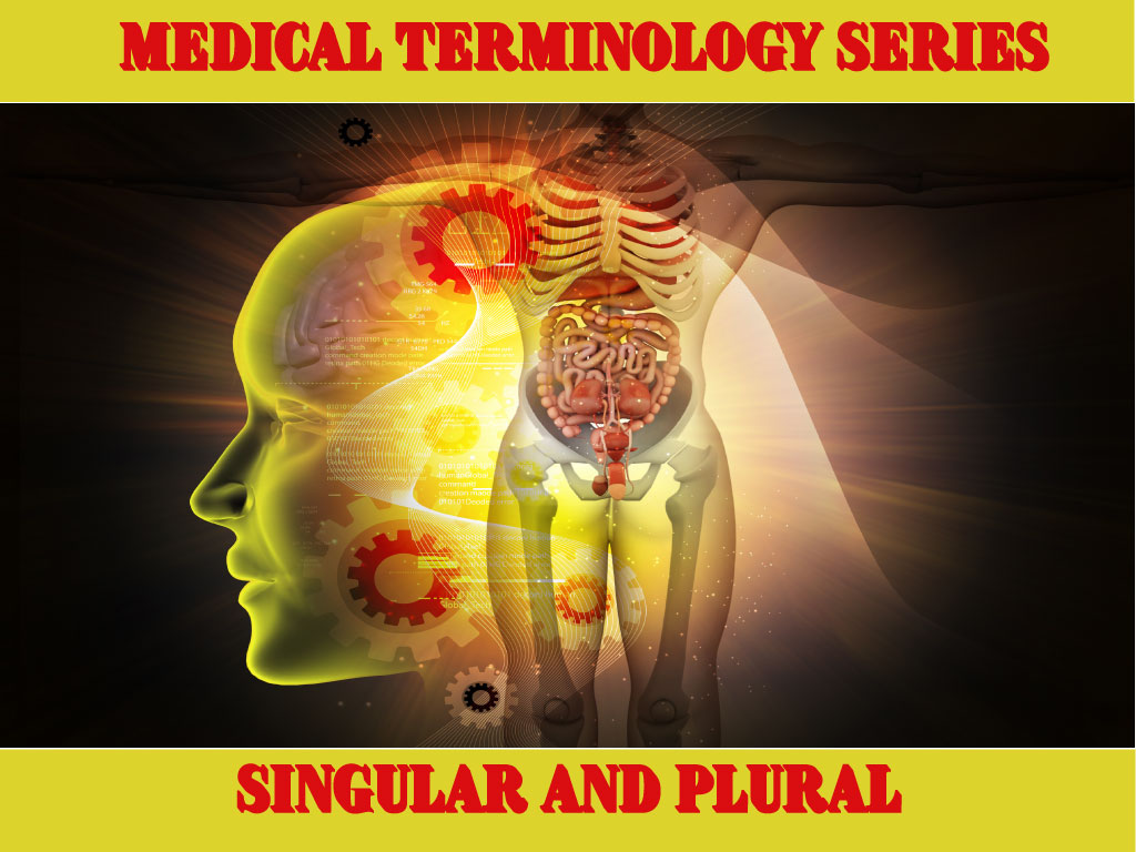 Medical Terminology List Of Singular And Plural Rules