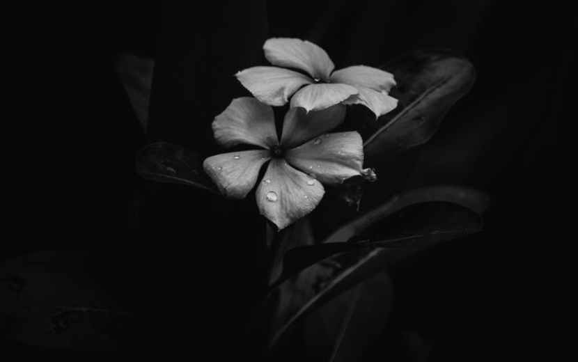 grayscale photo of flower with black background