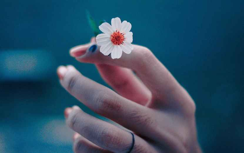 photo of person s hand holding a tiny flower