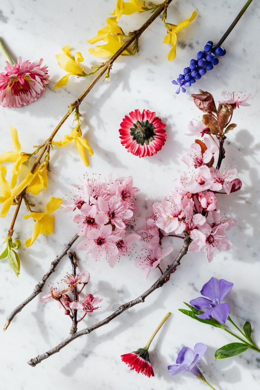 twigs with delicate flowers on white background
