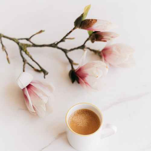 cup of coffee and blooming branch