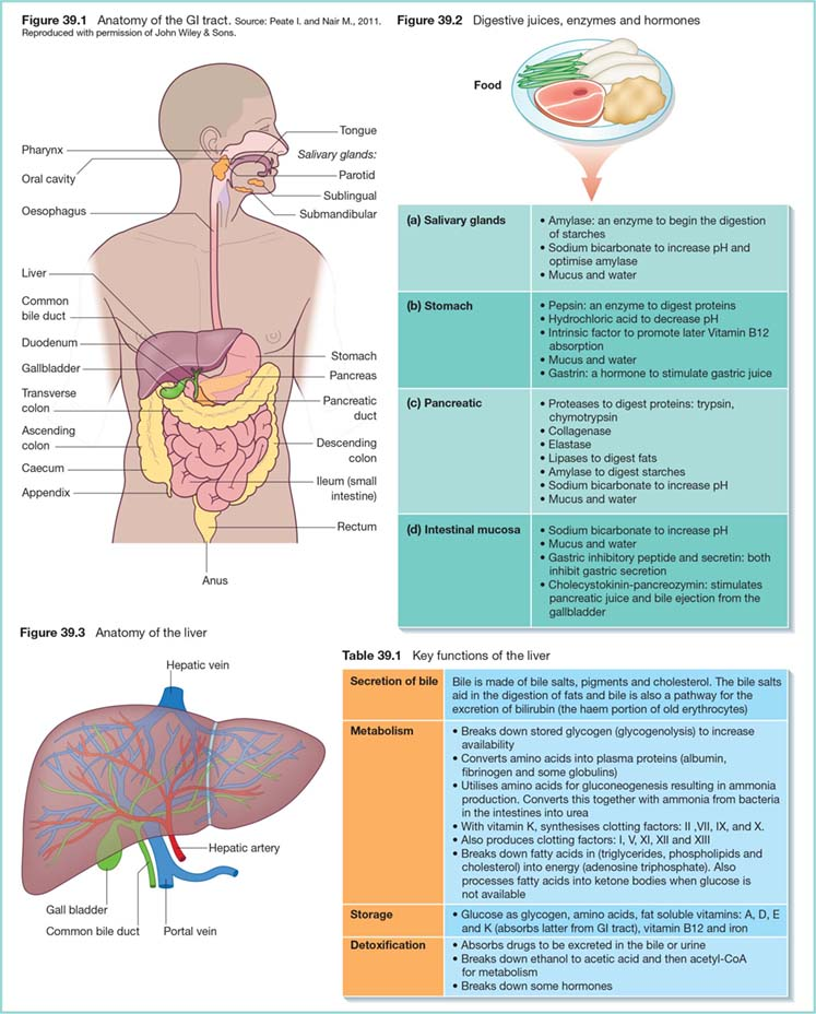 Diagram shows digestive juices, enzymes and hormones as salivary glands (mucus and water), stomach (gastrin: hormone to stimulate gastric juice), et cetera. It also shows secretion of bile, metabolism, storage, and detoxification as key functions of liver and anatomy of liver as hepatic vein, portal vein, et cetera.