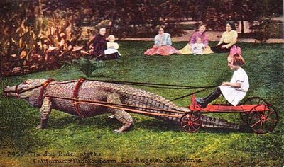 alligator ride