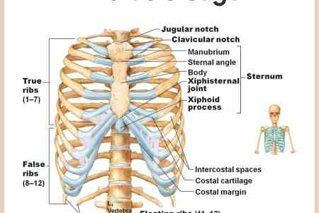interior internal bone structure quiz » Full HD MAPS Locations ...