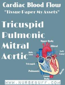 cardiac-blood-flow-nursing-mnemonics