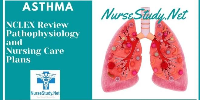 Asthma Nursing Interventions and Care Plans - NurseStudy.Net