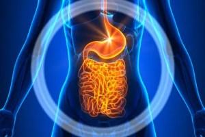 Intestines