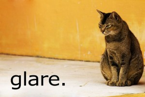 Glaring cat with text reading Glare