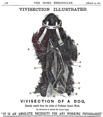 """Vivisection of a Dog"" illustration from The Home Chronicler, 1878. (Google Books 